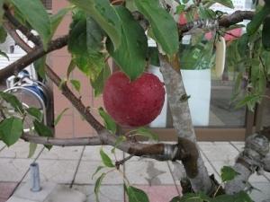 180816赤いりんご