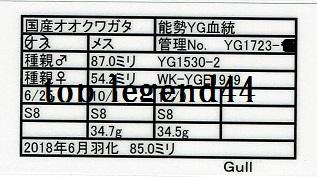 Gull1723-18♂85.0証明書11