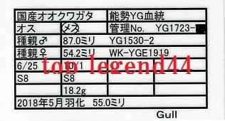 Gull1723-23♀55.0証明書11