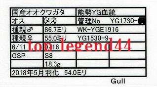 Gull1730-12♀54.0証明書11