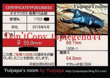 YP1703-23♀55.0㎜縮小1
