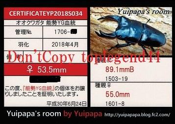 YP1706-15♀53.5mm縮小1