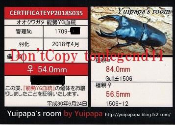 YP1709-22♀54.0mm縮小1