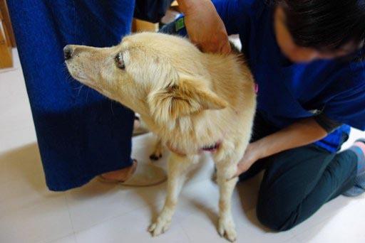 動物病院-a DSC03146