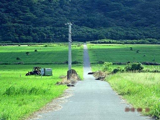 牧草-ax DSC01244