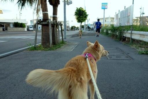 散歩-a DSC03251