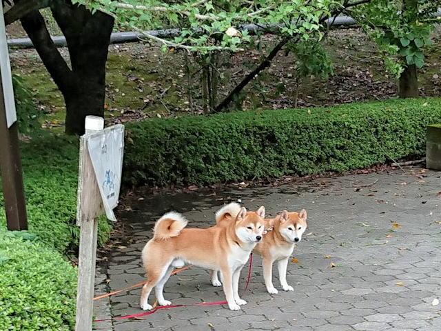 2018長岡公園625
