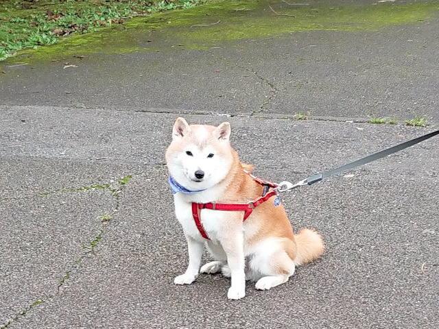 2018長岡公園626