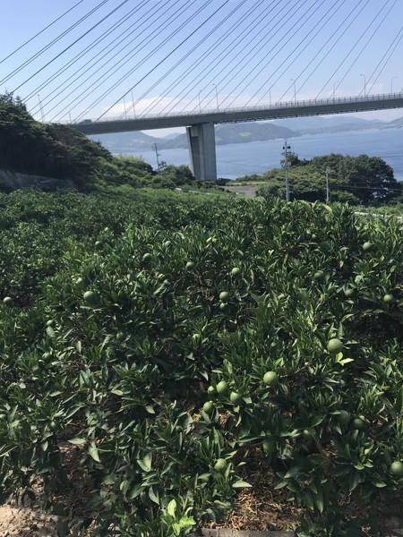 07_柑橘畑