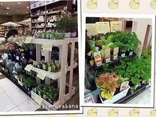 大府市リソラショッピングモール内:農業長田畑耕作さんに、ついに野菜苗が登場!