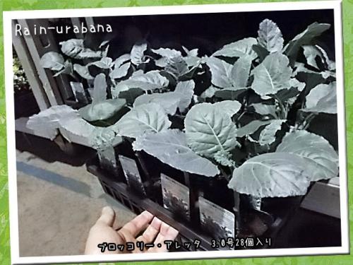 野菜にしとくには勿体ない葉の光沢だぁ(・ ・)