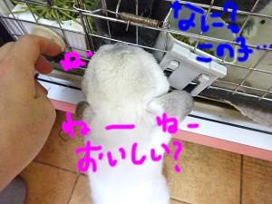 DSC08835.jpg