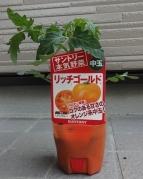 中玉トマト リッチゴールド