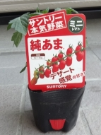 ミニトマト 純あま