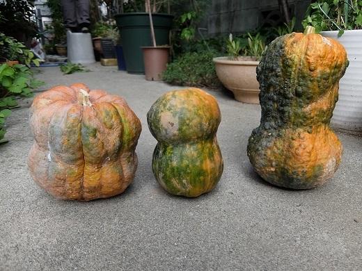 301009_鹿ケ谷かぼちゃ2