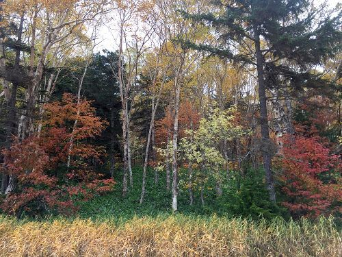 湿原周囲の紅葉