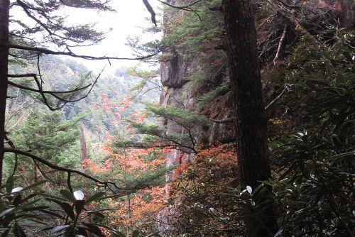 巨岩と紅葉