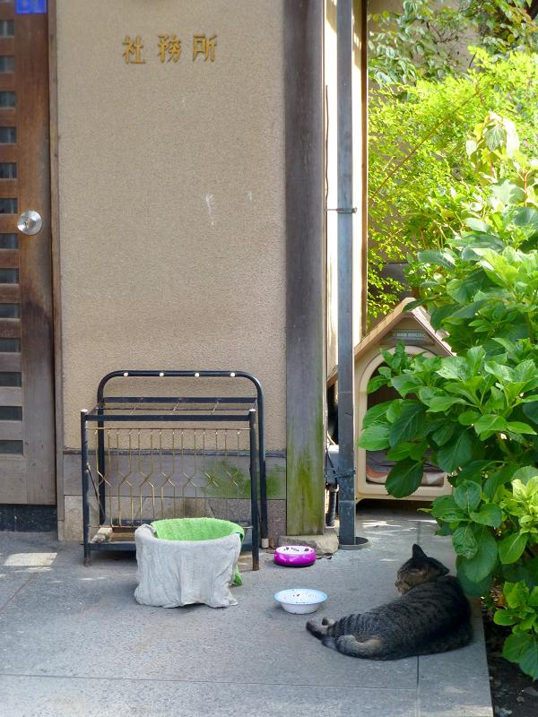 犬小屋とキジトラ猫1