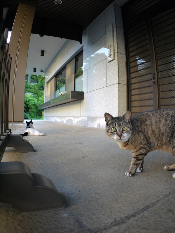 社務所前の猫たち