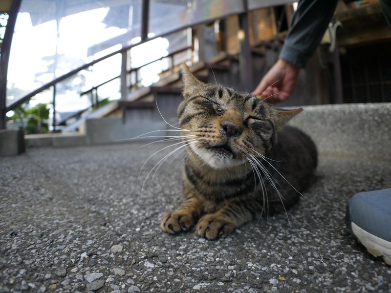 境内でブラッシングのキジトラ猫1