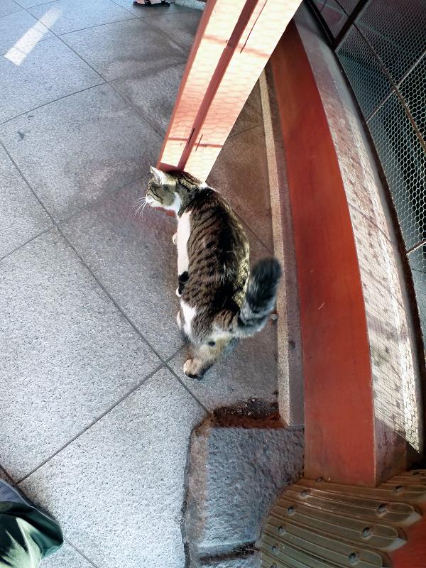 総門とキジ白猫1