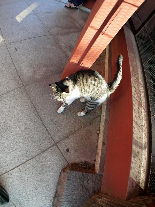 総門とキジ白猫2