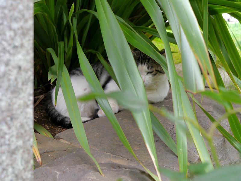 葉に隠れてる猫1