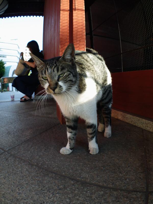 山門とキジ白猫1
