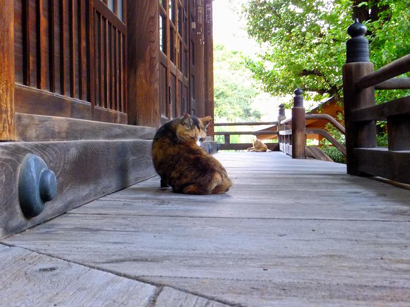 お堂回り縁と猫