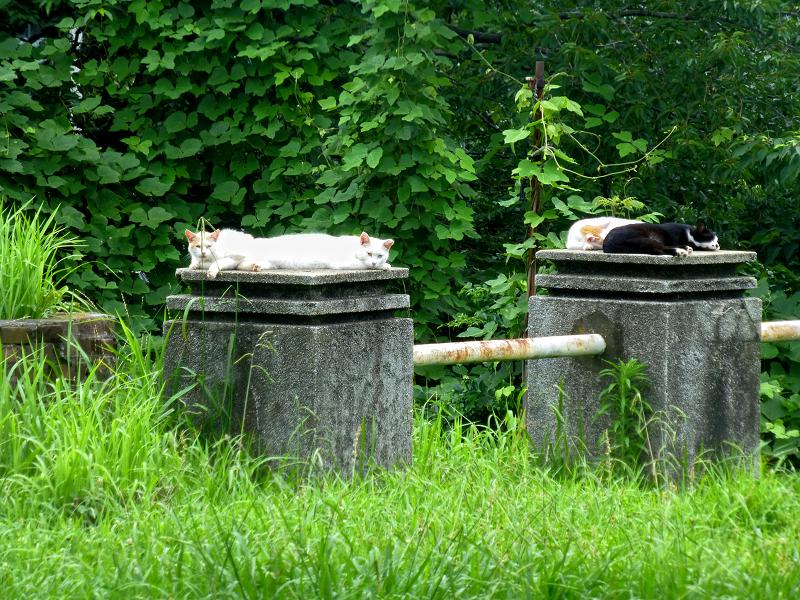 空き地のような庭にいた猫たち2