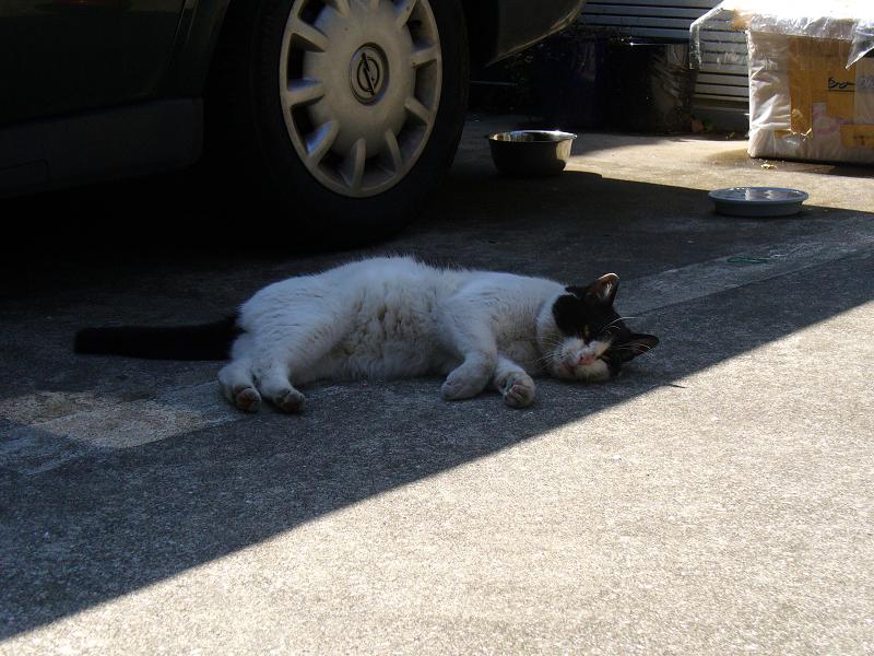 日陰で転がる猫2