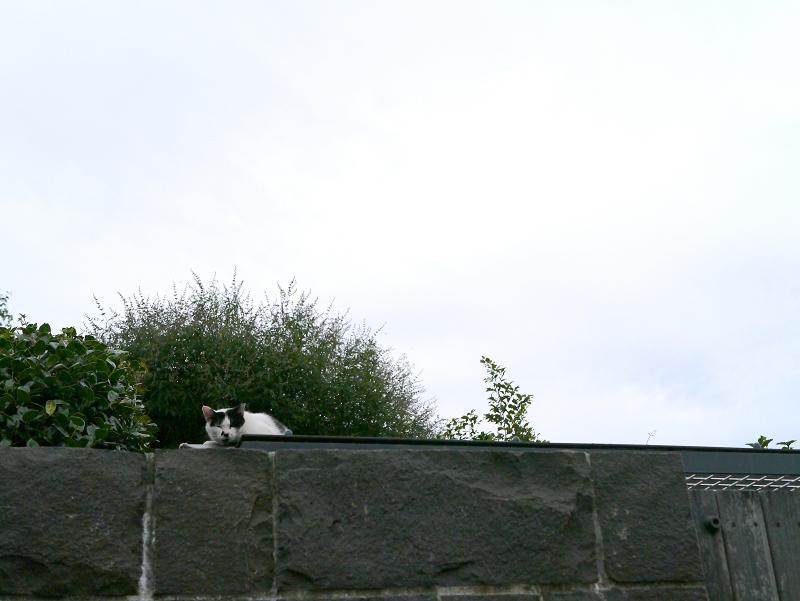 隠れて寝ていた猫2