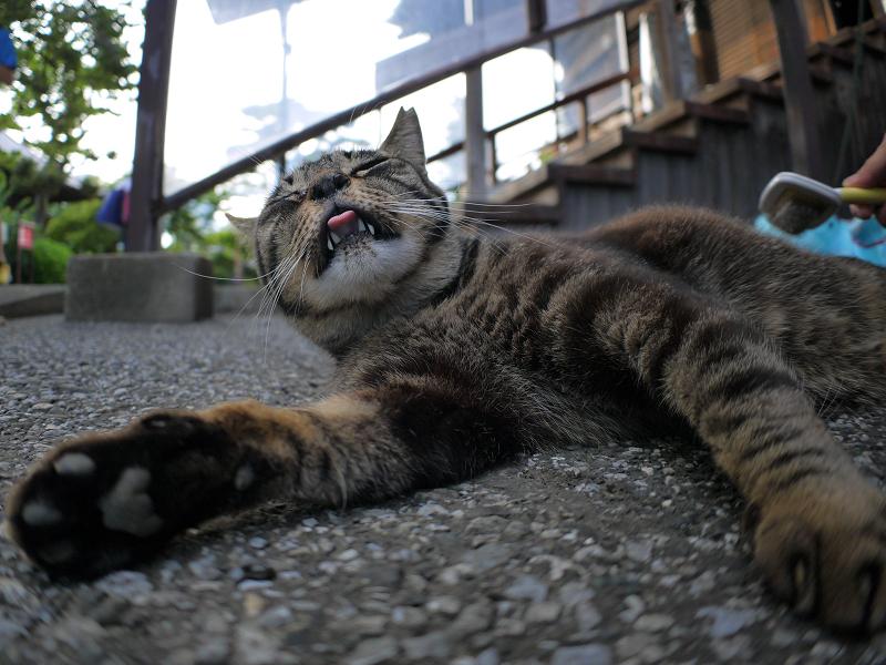 ブラッ心が快感のキジトラ猫3