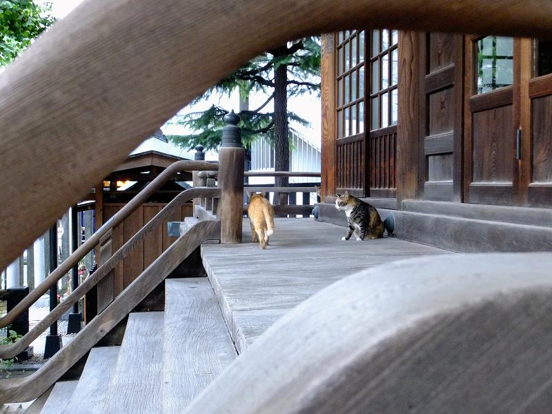 お堂正面階段の猫たち