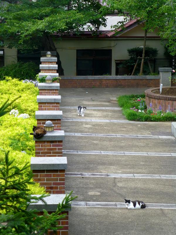 赤レンガ公園の猫たち1