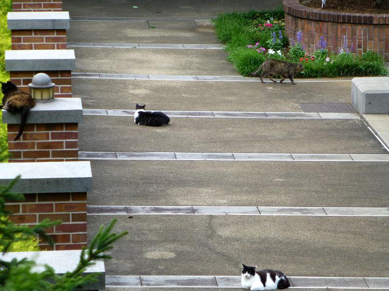 赤レンガ公園の猫たち2