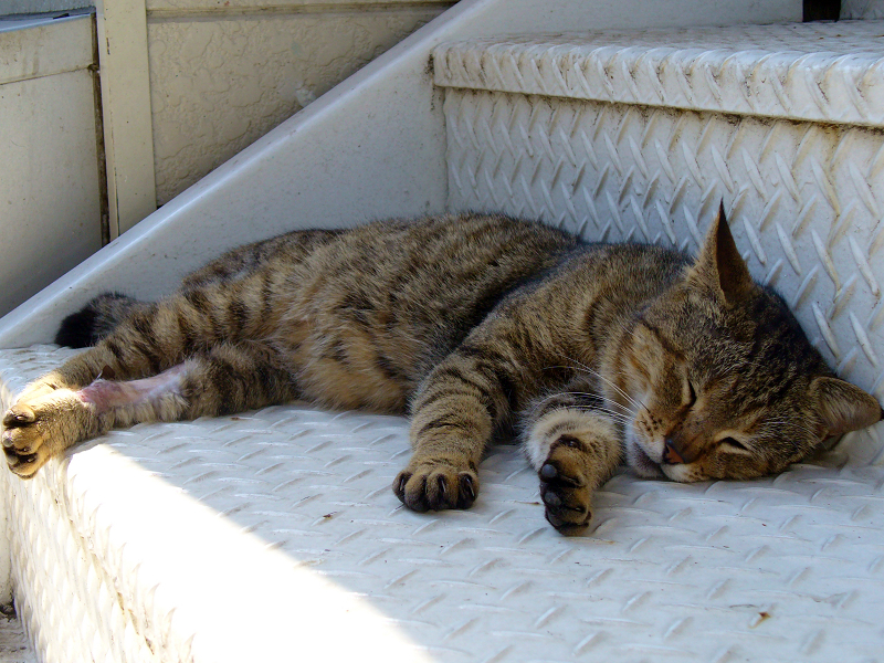 金属階段とキジトラ猫1