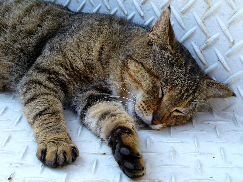 金属階段とキジトラ猫2