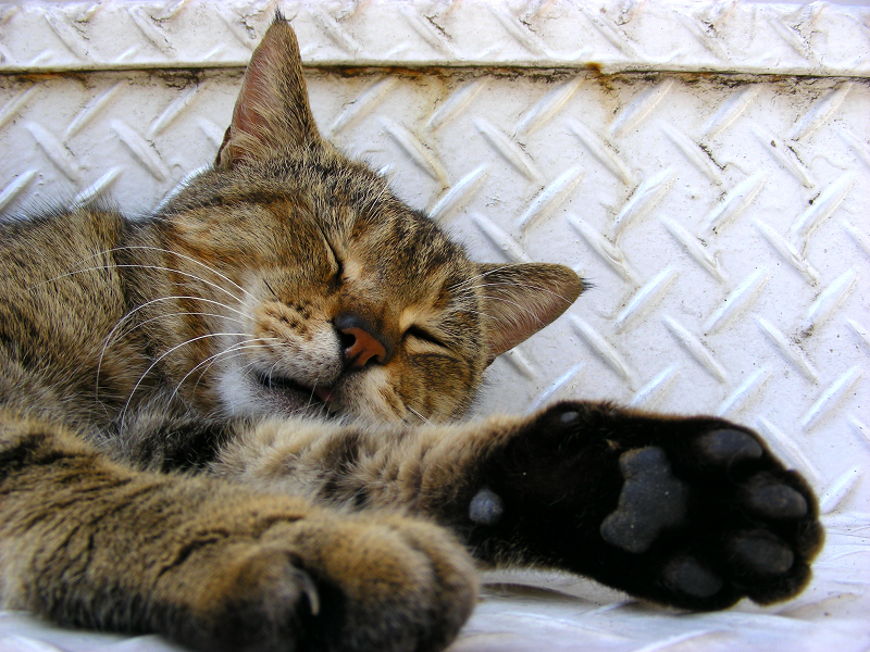 金属階段とキジトラ猫3