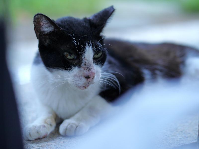 白いものと黒白猫1