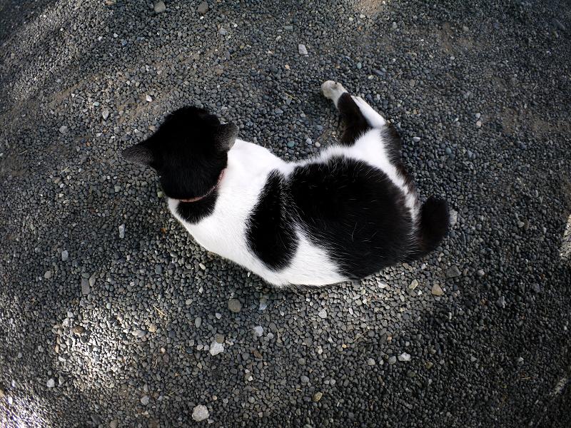 境内木漏れ日と白黒猫1