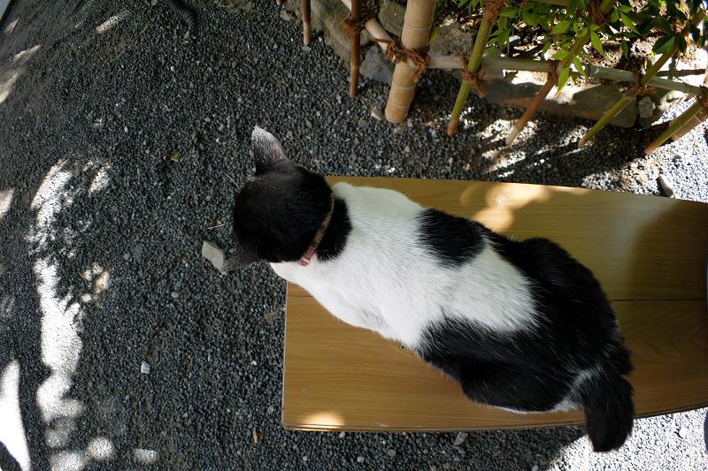 境内木漏れ日と白黒猫2