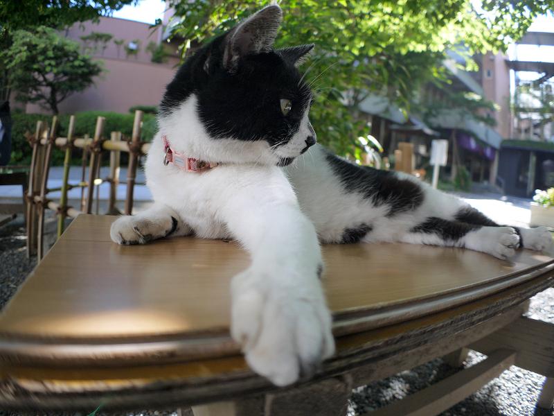 境内木漏れ日と白黒猫3