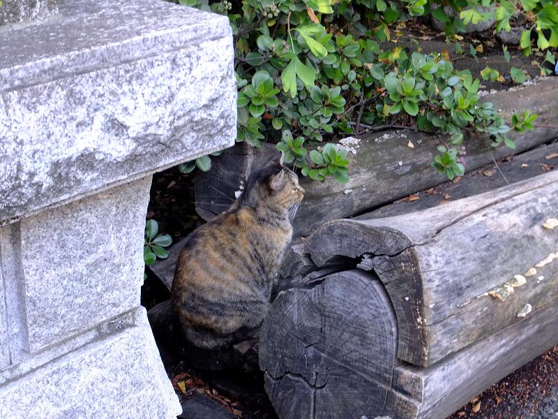 丸太と猫1