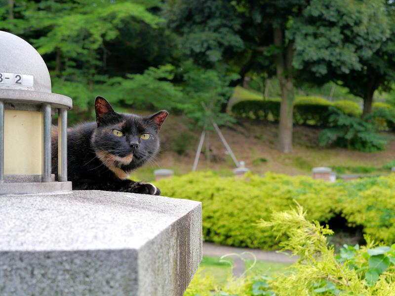 公園のサビ柄猫1