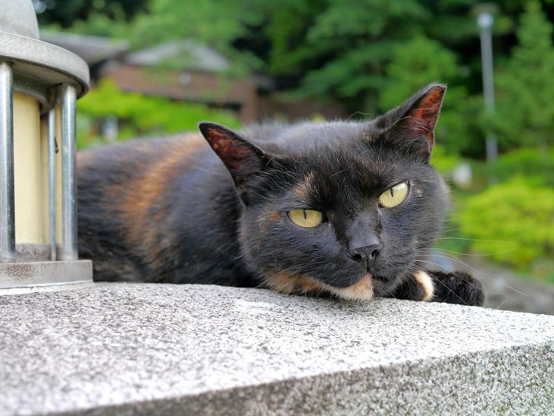 公園のサビ柄猫3