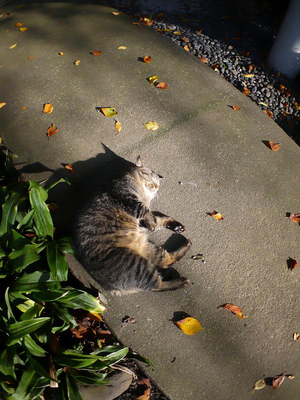 柔らかい日差しとキジトラ猫3