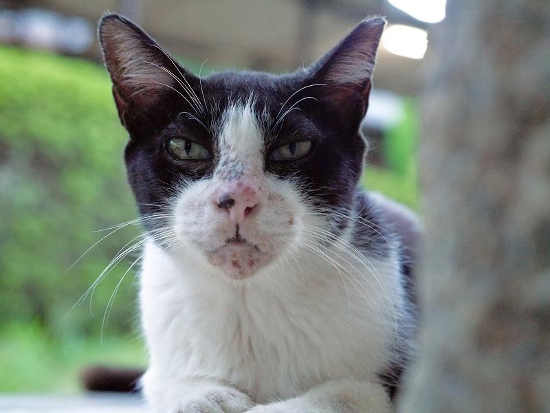 井戸端の黒白猫2