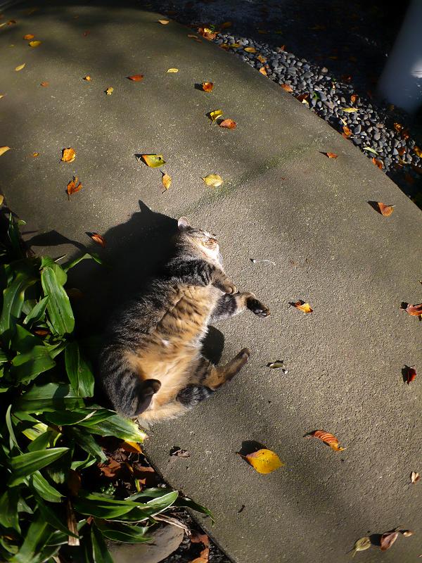 日差しを受けて嬉しそうなキジトラ猫1