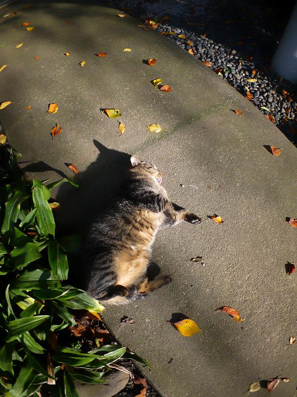 日差しを受けて嬉しそうなキジトラ猫2